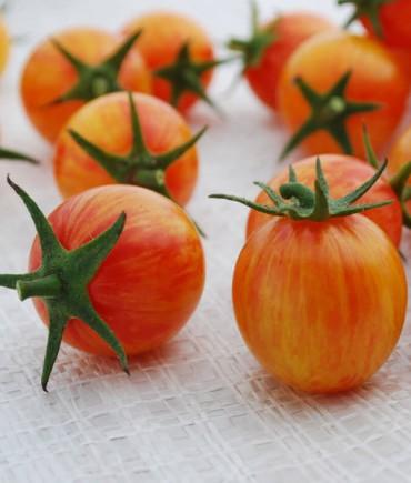 cherry tomato photo